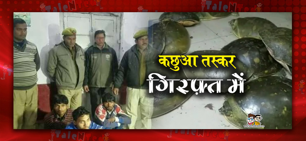 254 Turtles Recovered From Three Turtle Smugglers In Uttar Pradesh