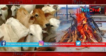 Bhopal Became The First In Country For Having Cows Crematorium