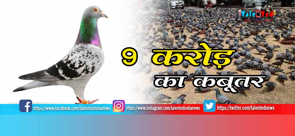 Armando Lewis Hamilton Of Pigeons Sold More Than 9 Crore, Know Speciality