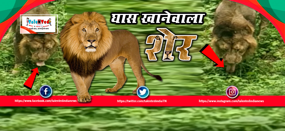 Gujarat Lions Eats Grass Video Goes Viral On Social Media