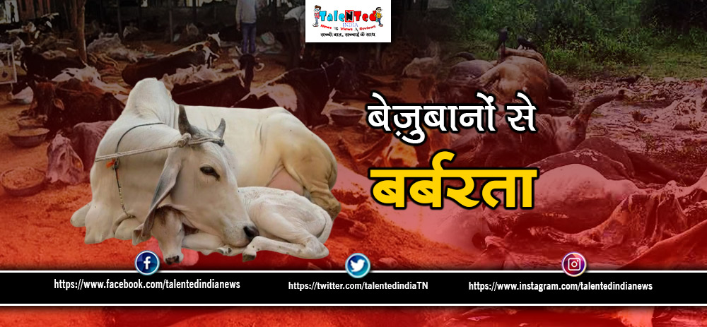 Cows Found In A Closed Room In Gwalior