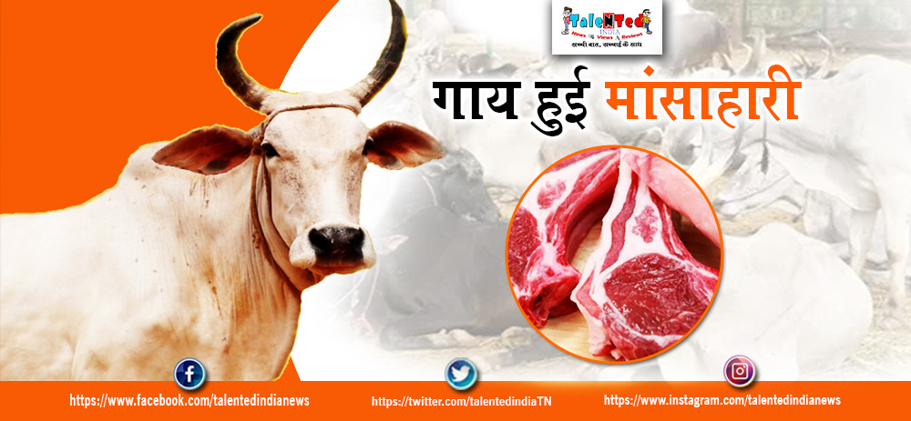 Cattle Turning Non Vegetarian