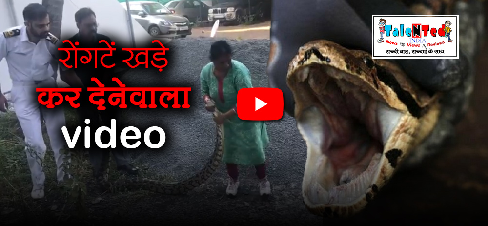 See How Bravely A Women Caught a Huge Python