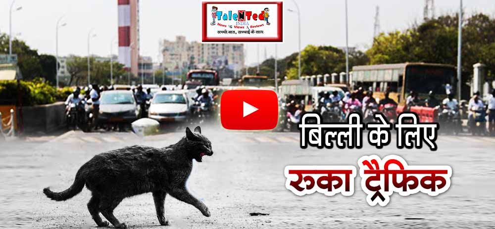 Viral Video Indonesia Police Officer Stop Traffic To Let The Cat Cross Road
