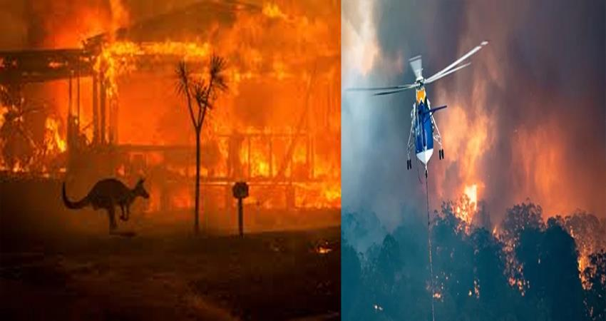 Australia Wildfires   Important Fact You Need To Know