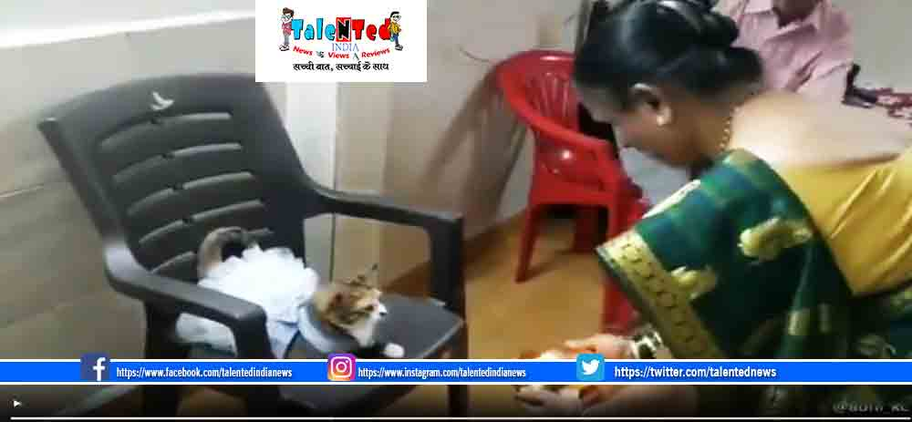 Human Dresses Cat Video Viral | And Then Performs Aarti
