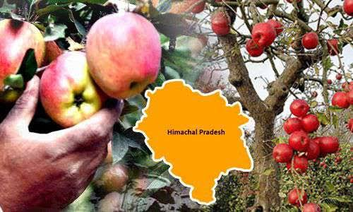 India's Most Richest Village Madavag In Shimla By Farmers