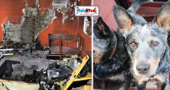 Two Dogs Sets Home On Fire In New Mexico | Hindi News